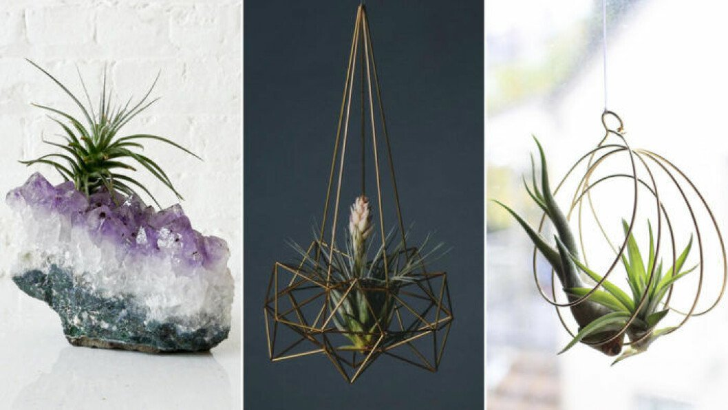 Luftplantor i olika dekorativa och nytänkande krukor