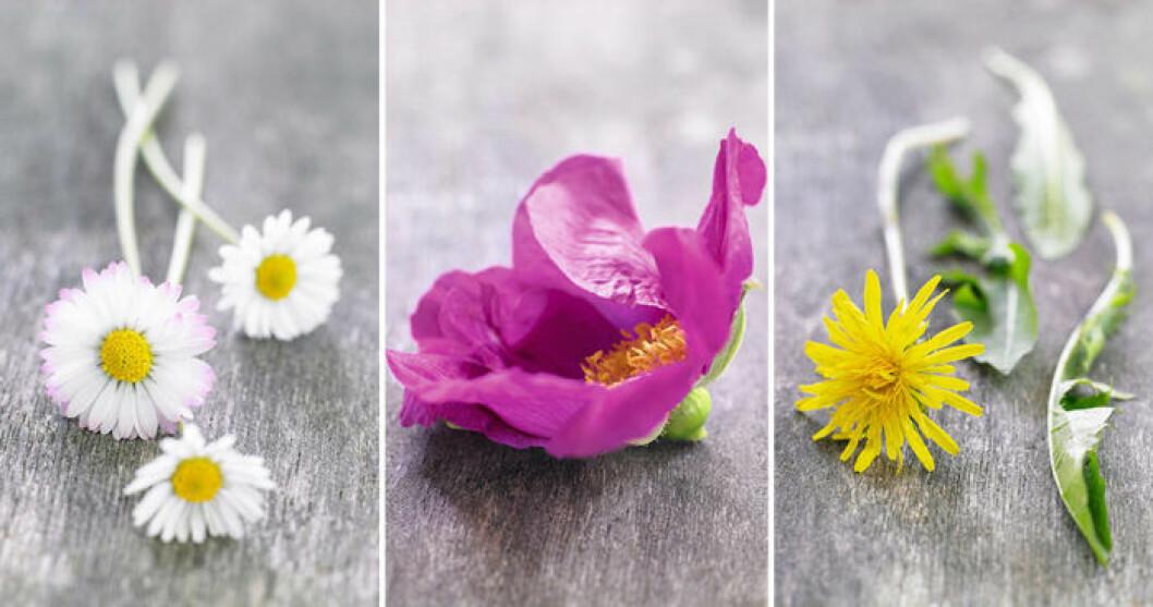 Ätbara blommor. Foto: Ina Agency