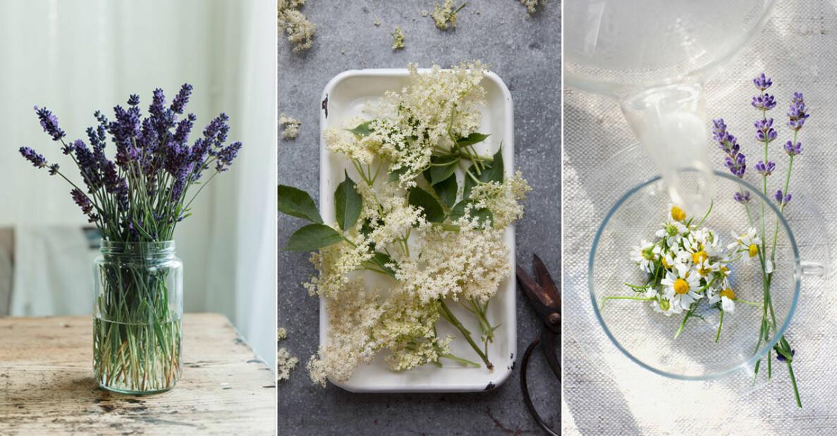 ELLE Decoration tipsar om åtta ätbara blommor att plantera på balkongen, som viol och fläderB