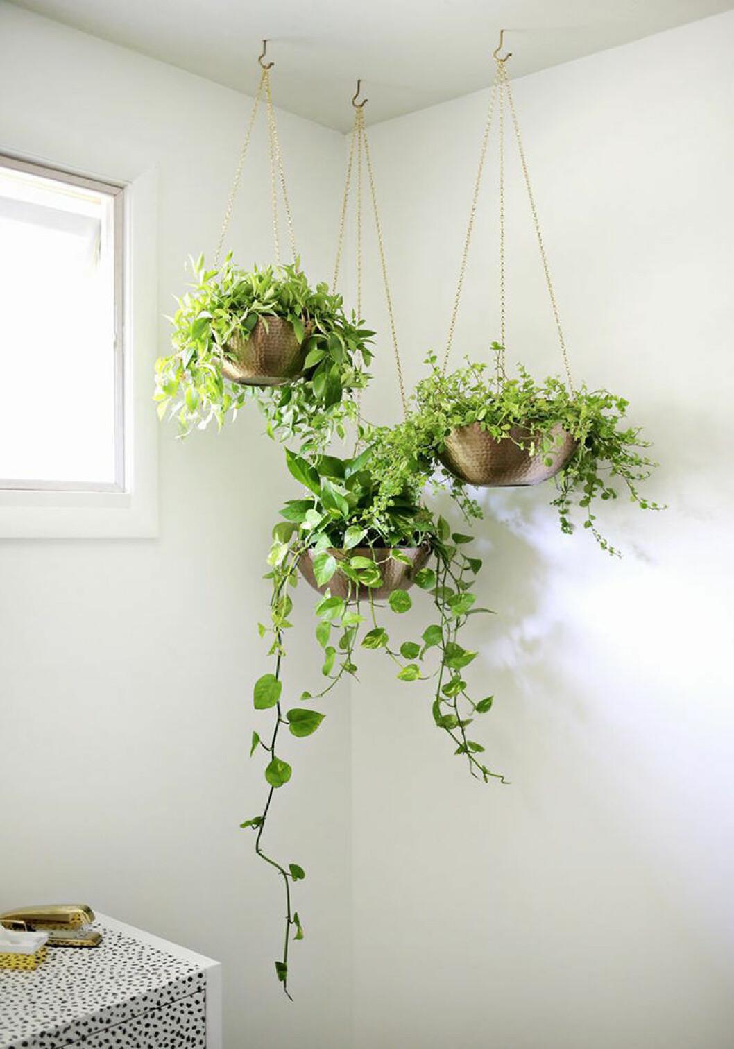 Häng upp växterna i taket.