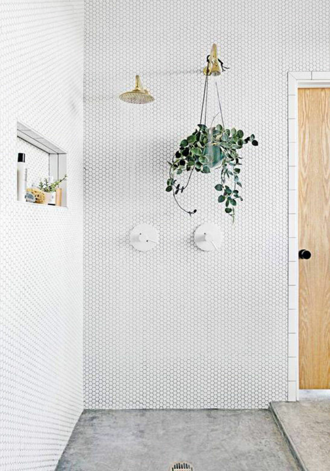 Placera växten i duschen.