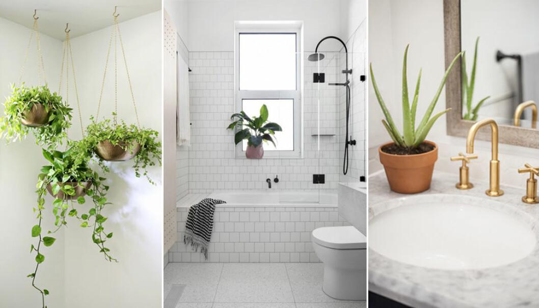 Så dekorerar du växter i badrummet.