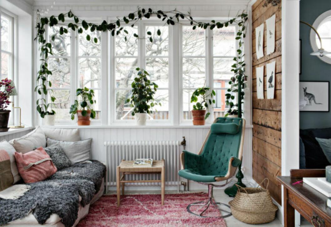Tips om klätterväxt i fönster