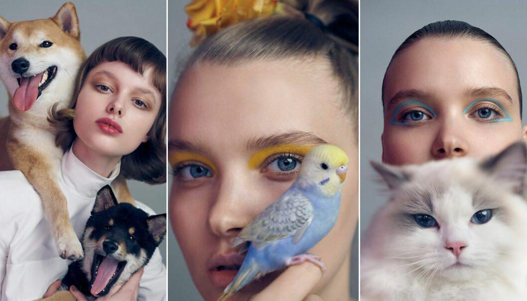 Beautytrender ögonmakeup 2020