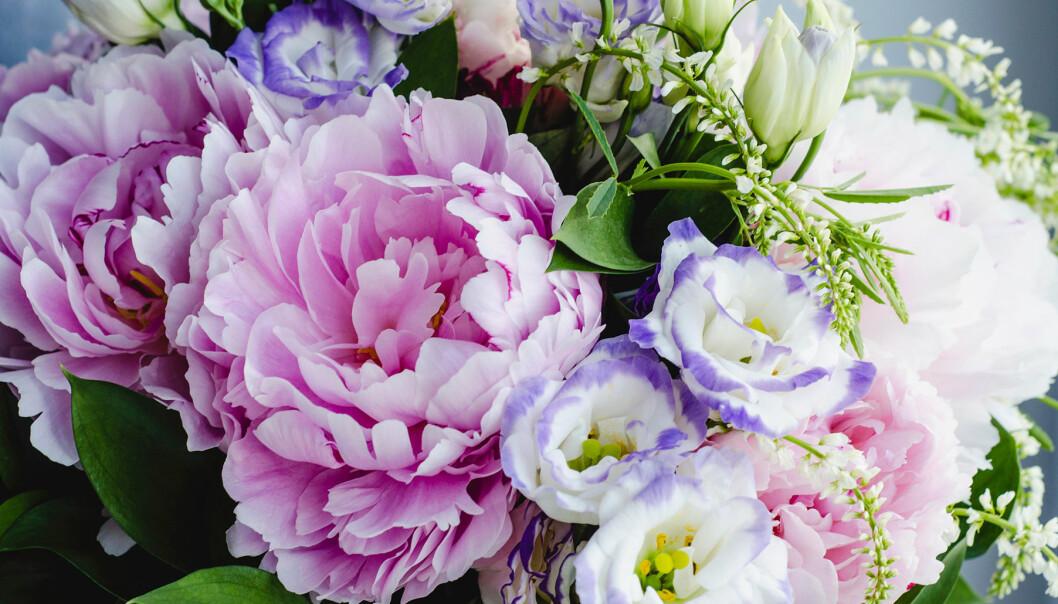 Detalj av vacker blomsterbukett i lila toner