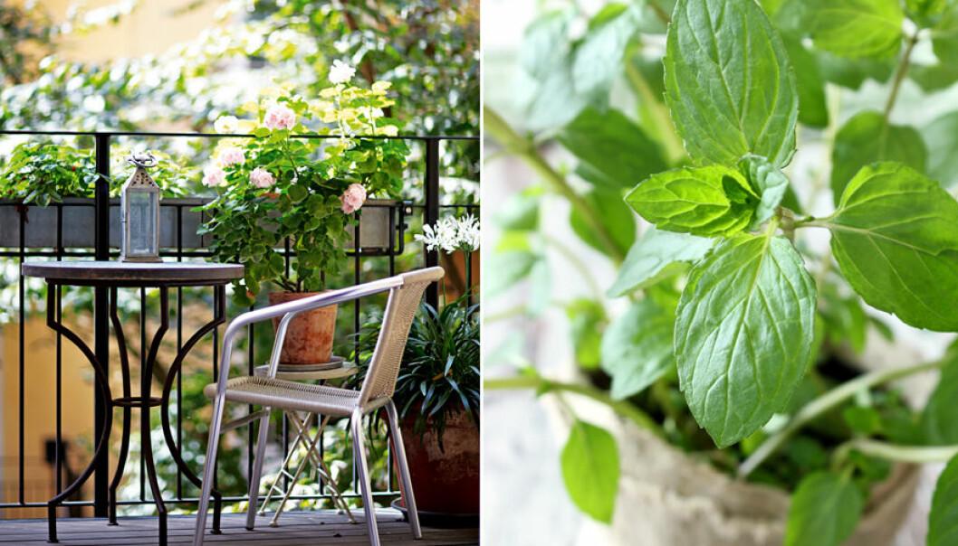 Lättskötta växter att plantera på balkongen
