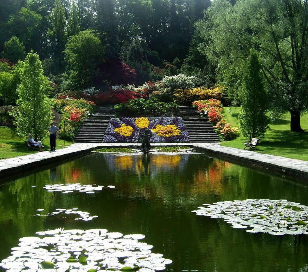 Damm i Botaniska trädgården i Göteborg