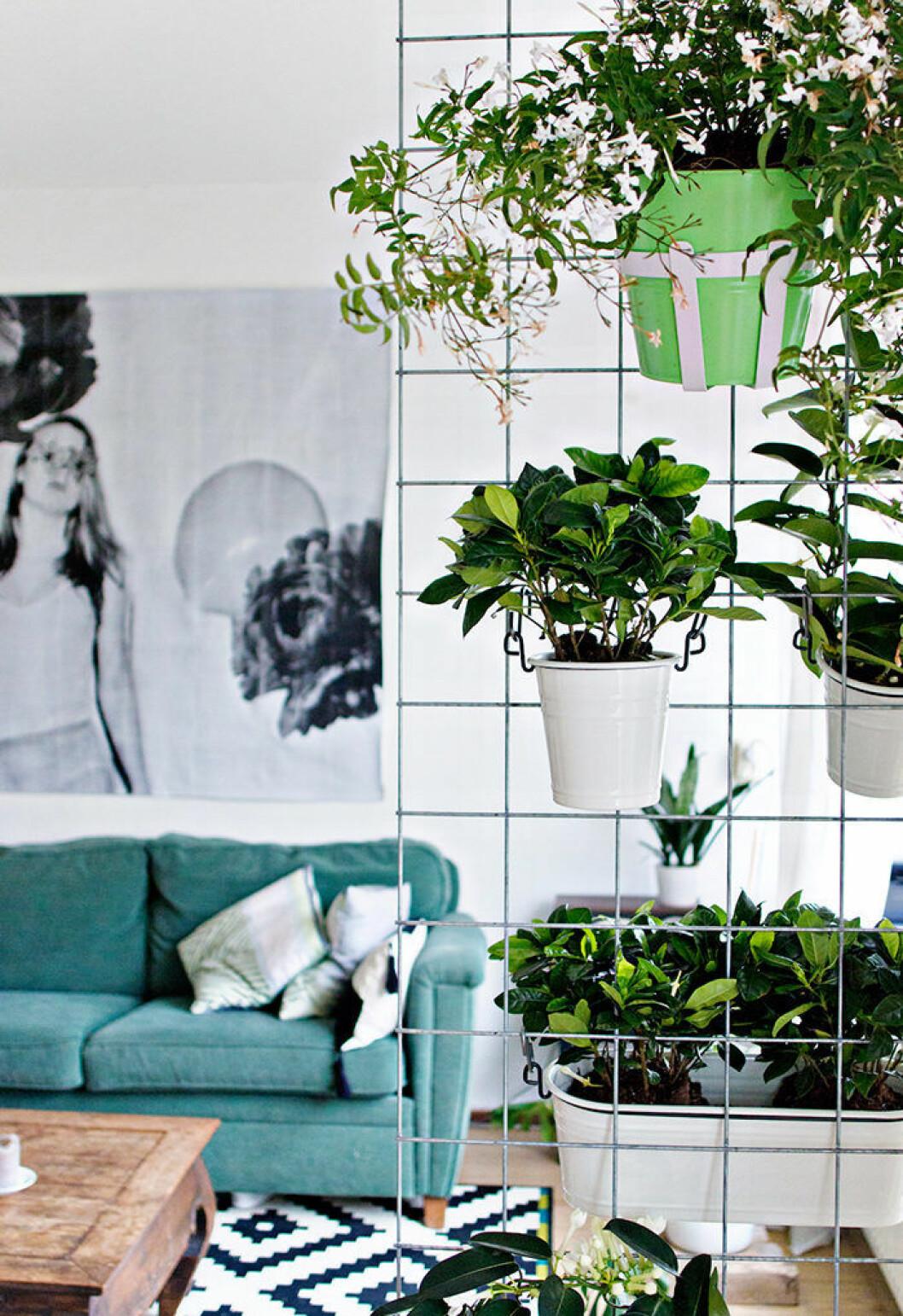 Inred med en minimalistisk spaljé inomhus