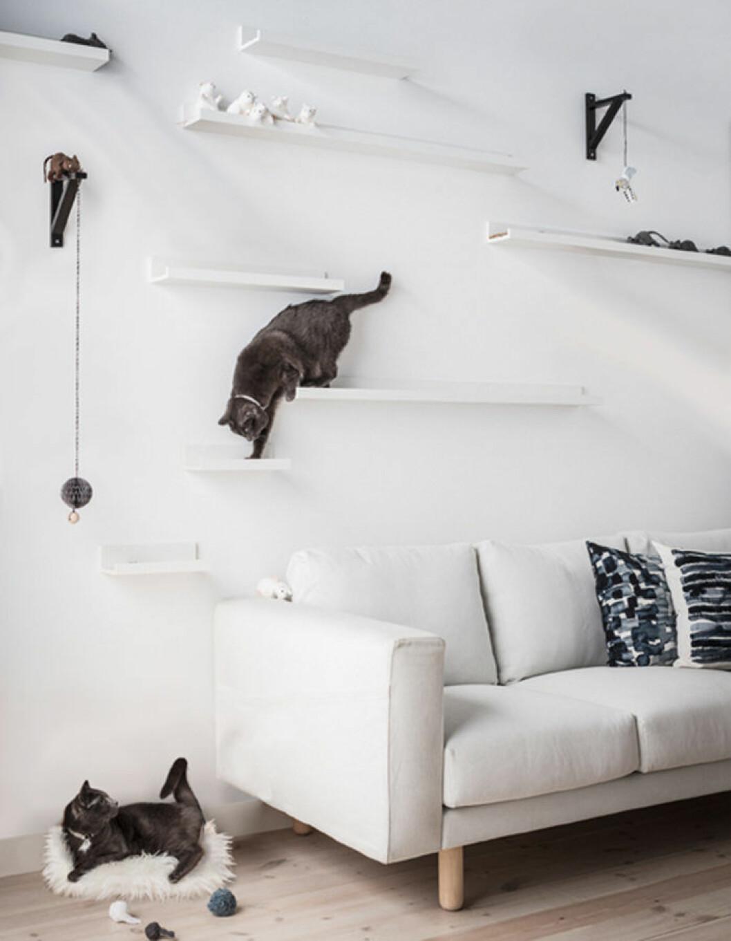 DIY för katt, klättervägg IKEA mosslanda
