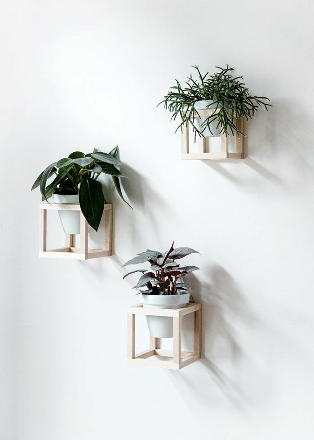 Sätt upp växterna på väggen.