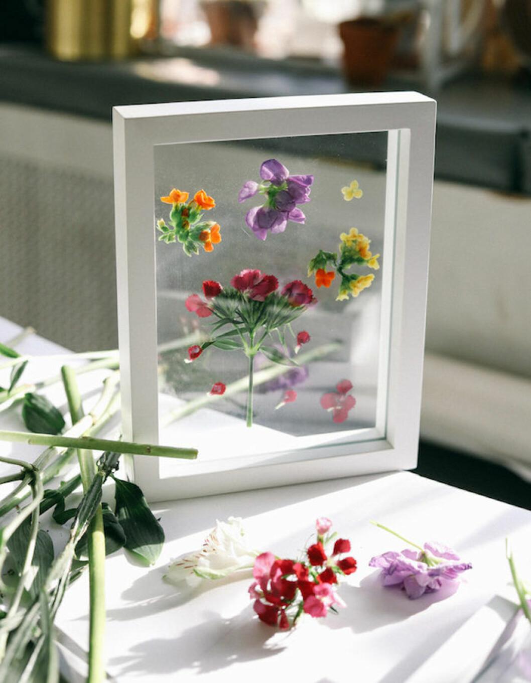 DIY tavla med pressade blommor