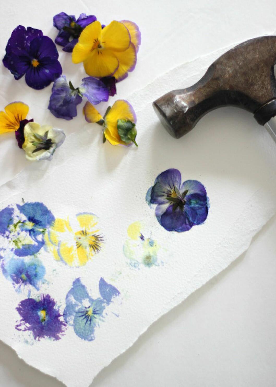 Pressade blommor.