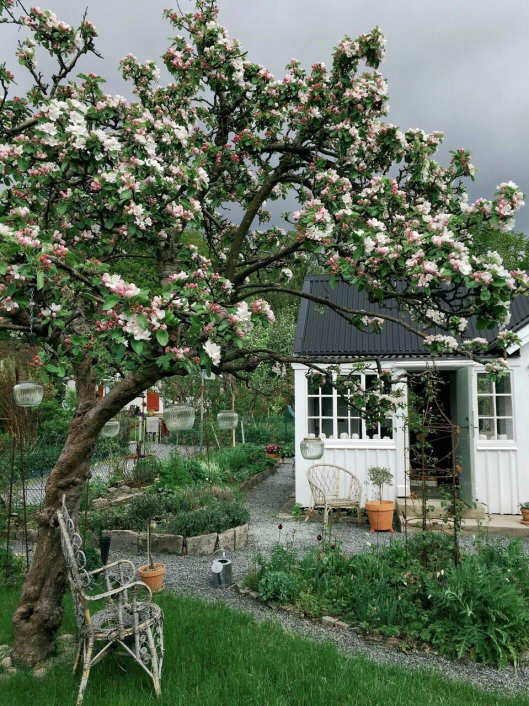 Elin Lannsjös hem