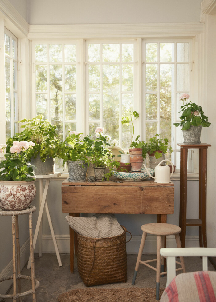 Inred sommarhuset med växter