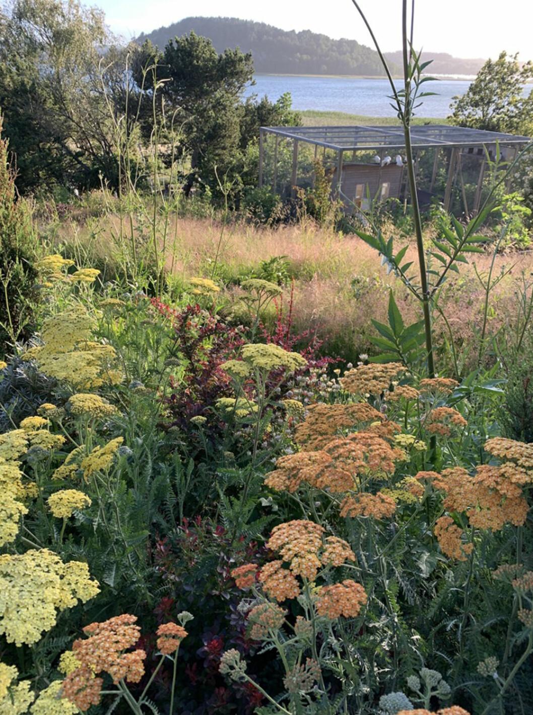 trädgårdsinspiration från Emily Bratt