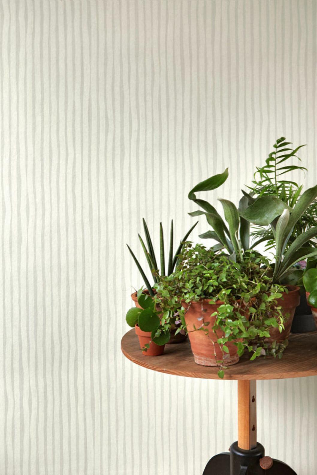 Gröna små växter