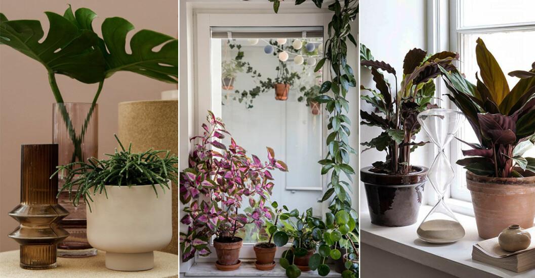 Så vattnar du krukväxterna i sommar, enkla självbevattningstips