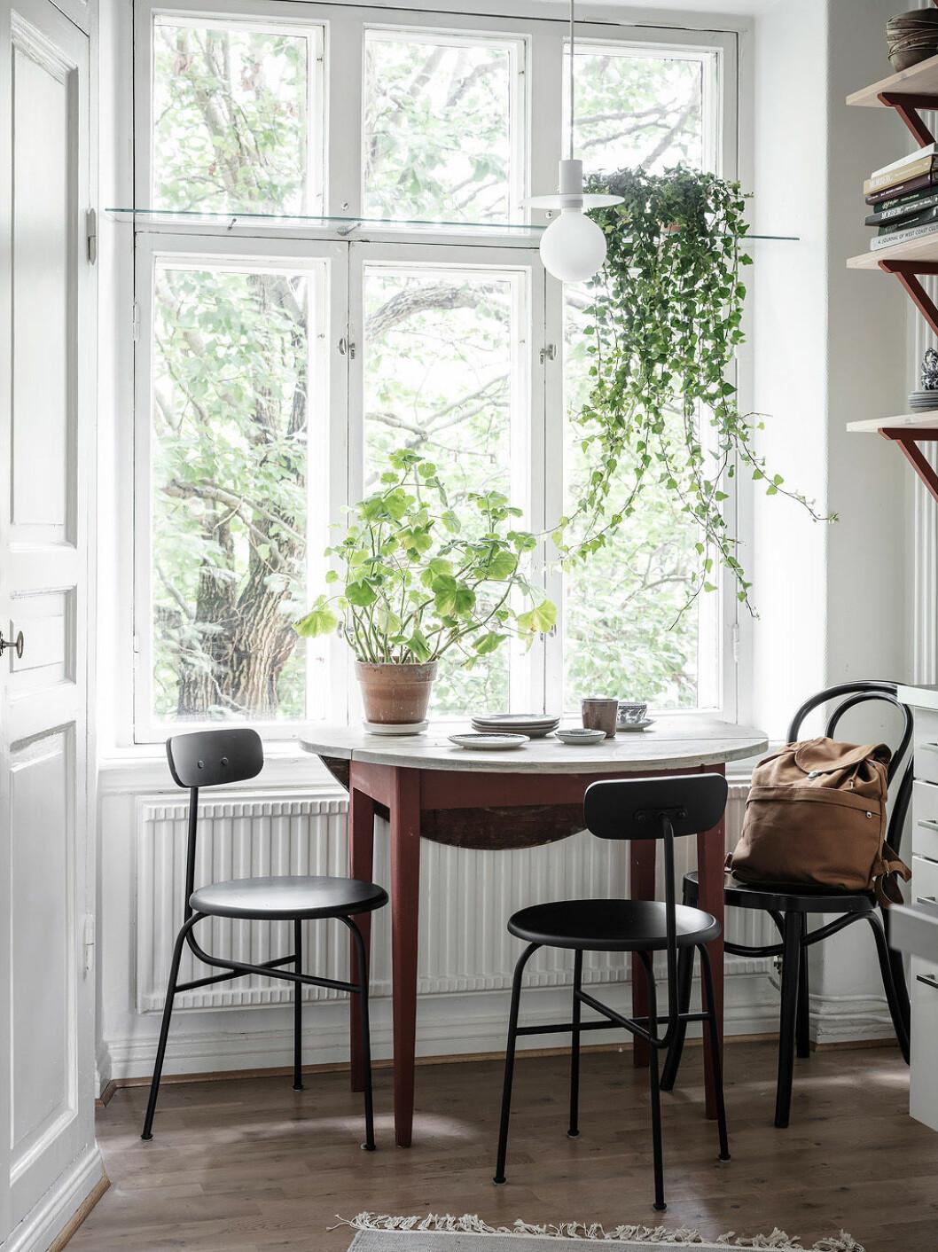 Att ta hand om växter ger oss vårkänslor hemma