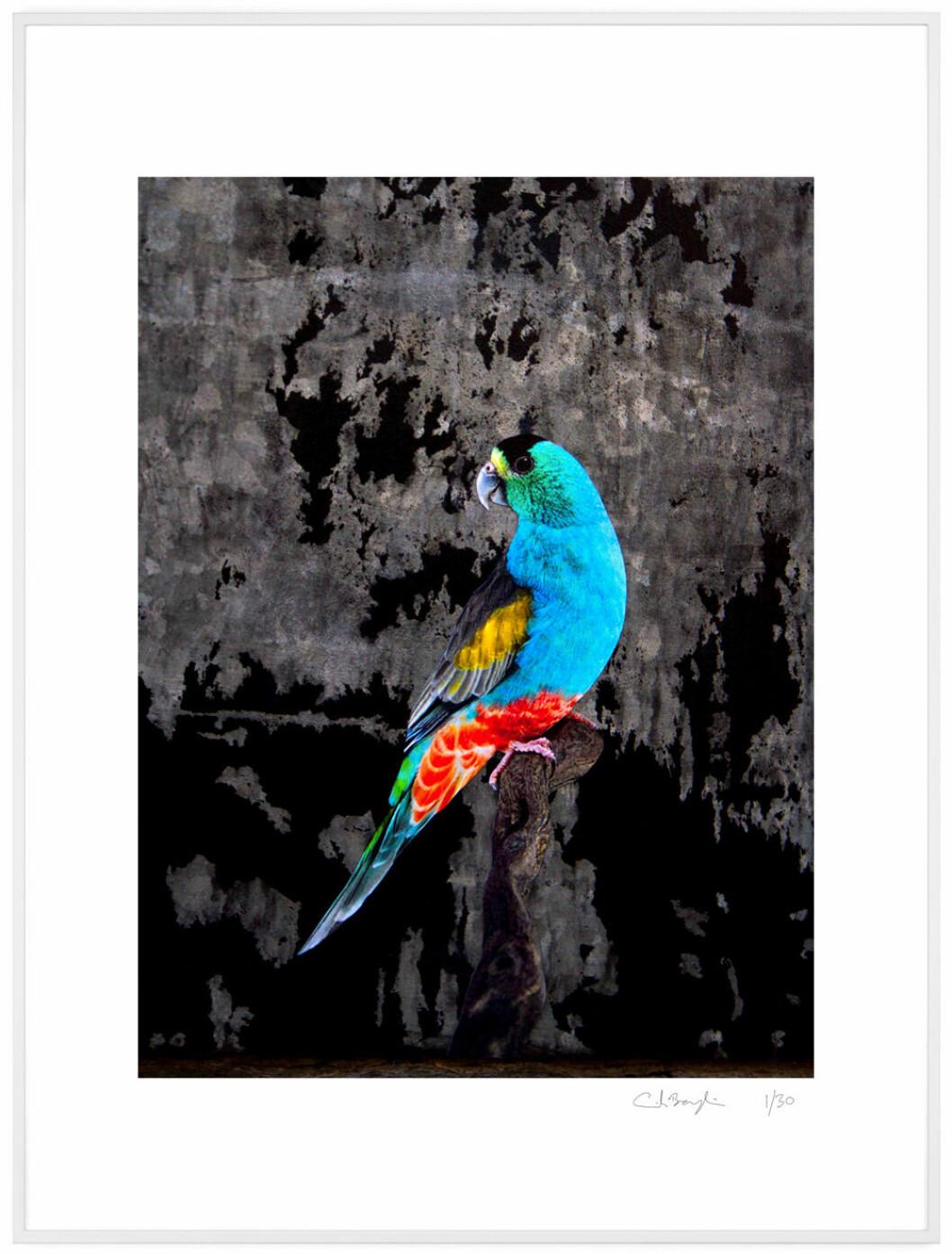 Erik Berglin fågeltavla för Absolut art i limited edition
