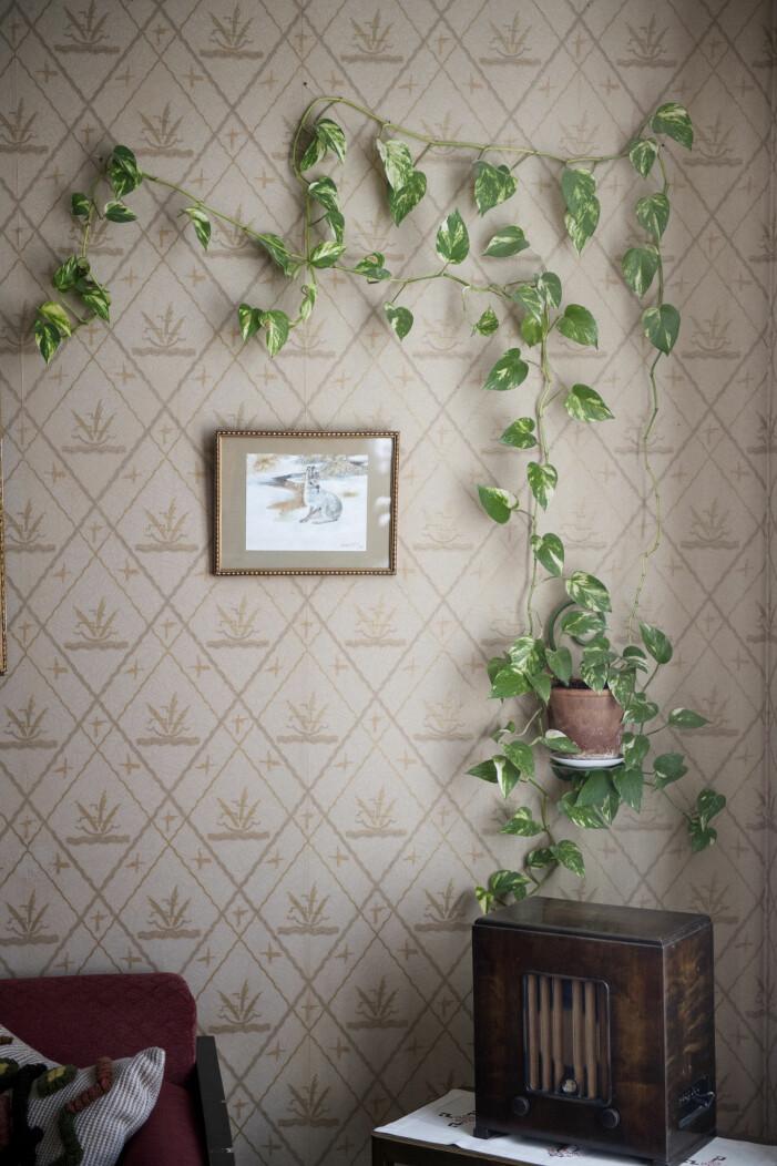 Fäst din växtgardin på väggen