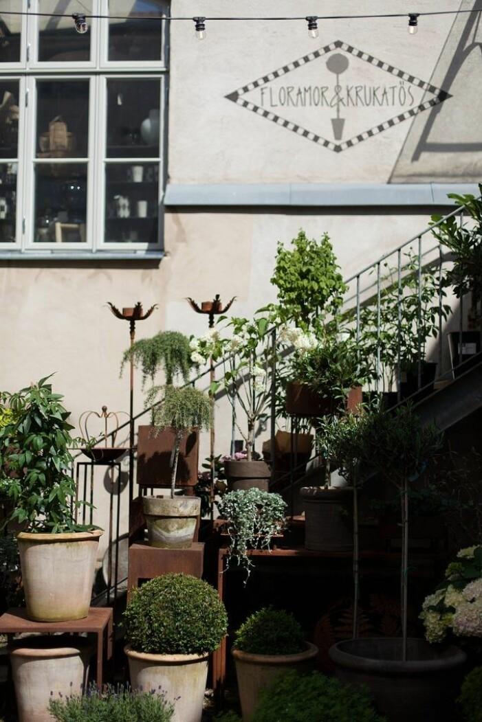 Floramor & Krukatös hittar du i Göteborg