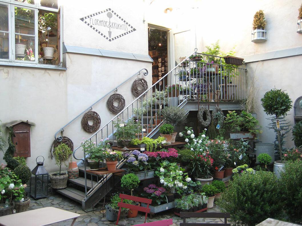Vacker grönska i en trapp som leder upp till butiken Flora mor och Krukatos.