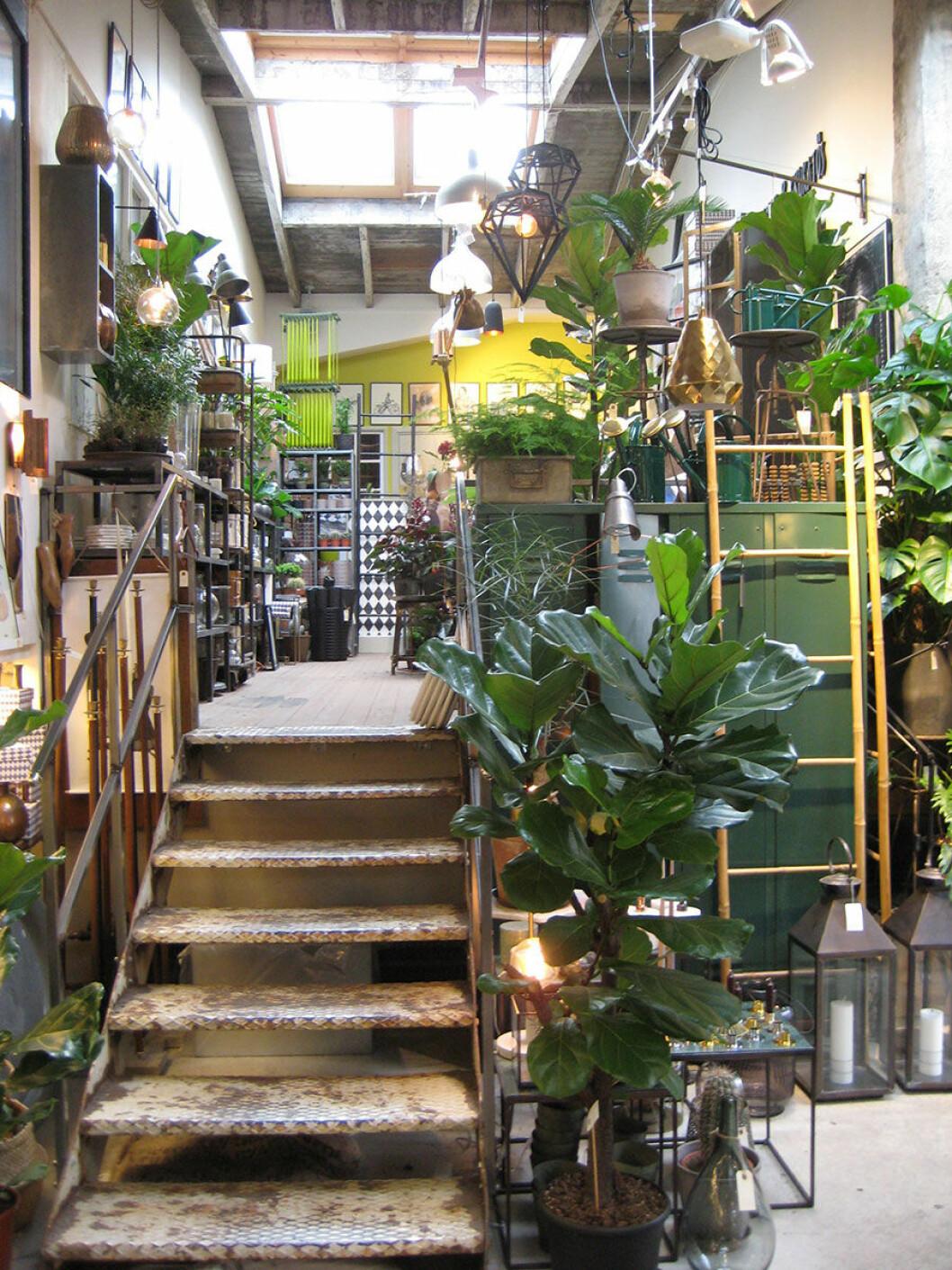 Sprakande grönska i butiken Flora mor och Krukatos.