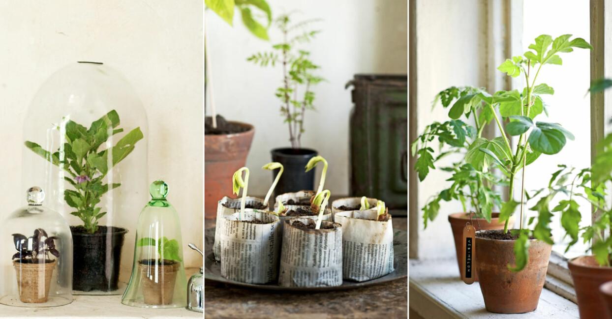 Förbered köksträdgården hemma