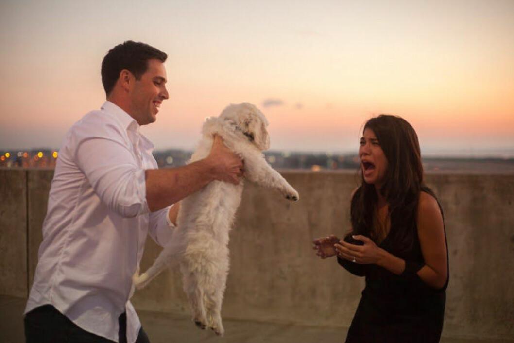 Man som precis har friat ger sin fru en hundvalp