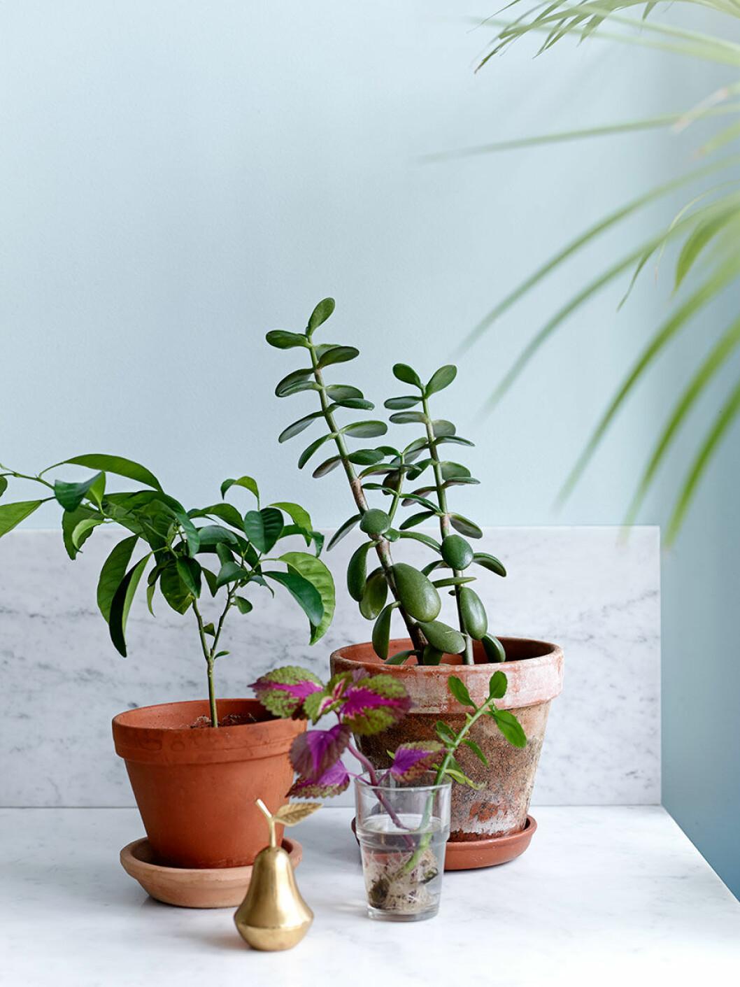 Så tar du hand om dina växter på bästa sätt