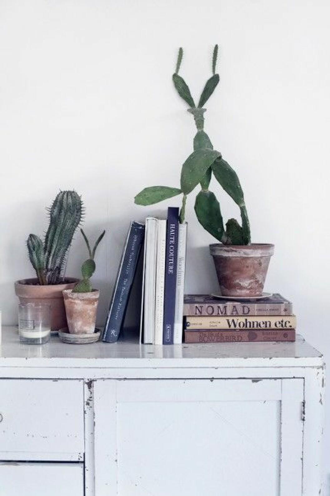 gammalt skap kaktusar bocker stilleben