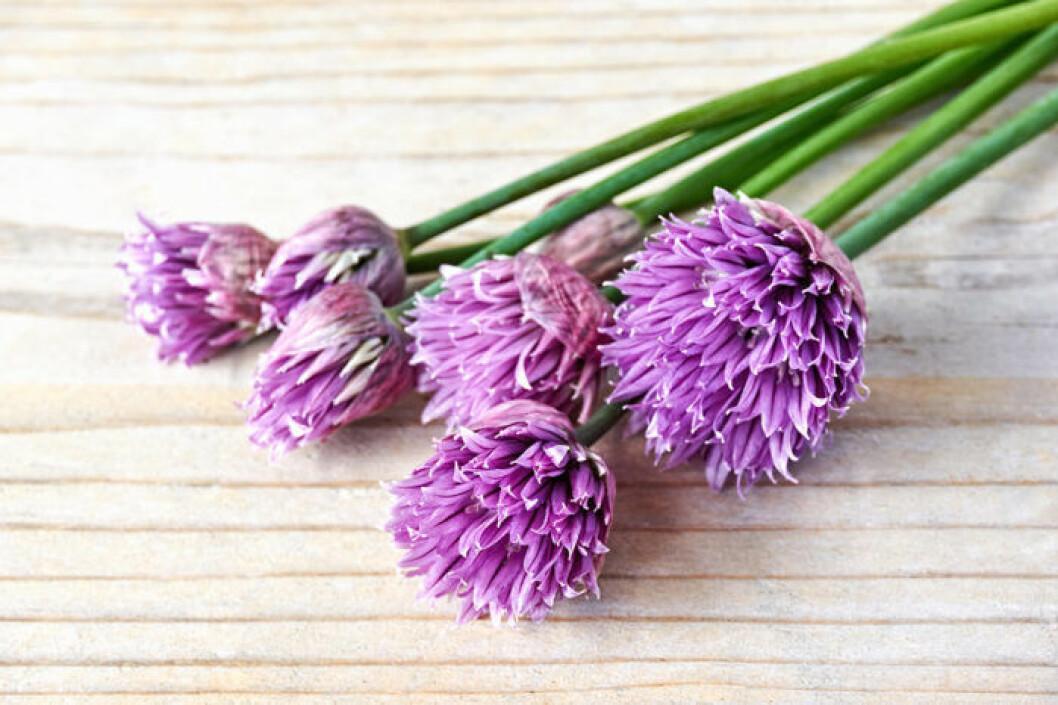 Gräslöksblommor har mild smak och vacker lila färg.