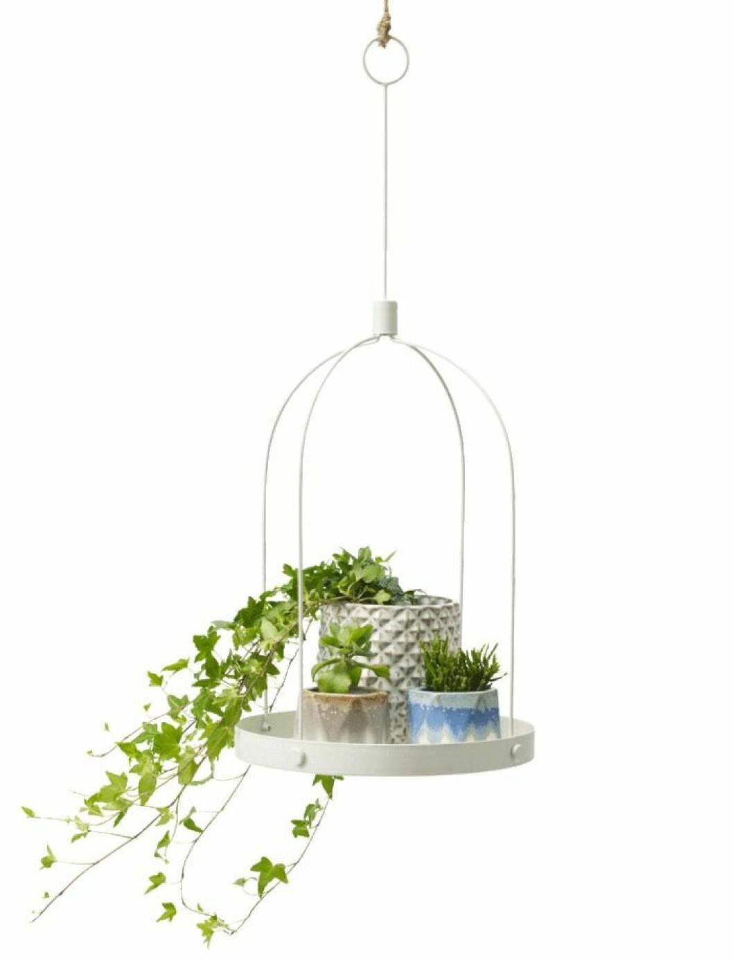 Fin hängande bricka för växterna