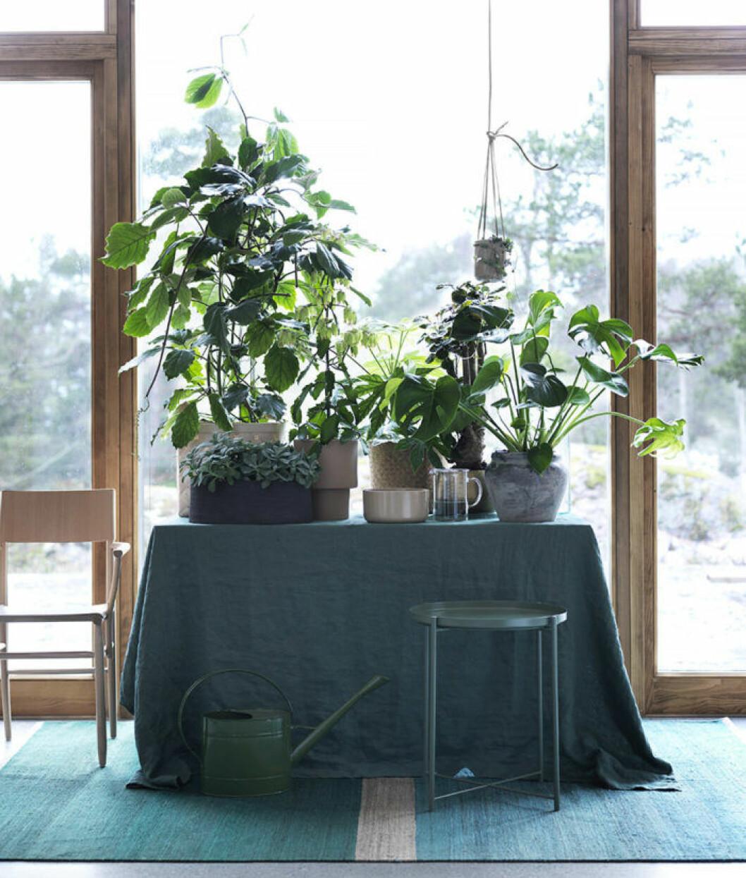 Bord med gröna växter på