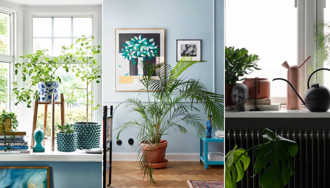 olika miljöer med gröna växter