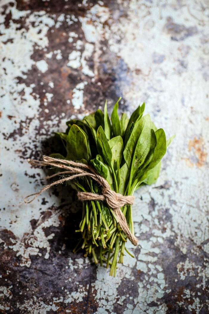 Enkla grönsaker att odla i växthuset, spenat
