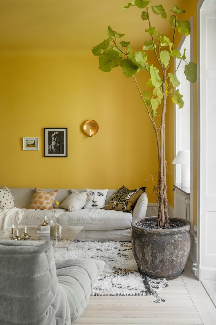 Hemma hos Helena Sand gula väggar fikonträd matta togofåtölj