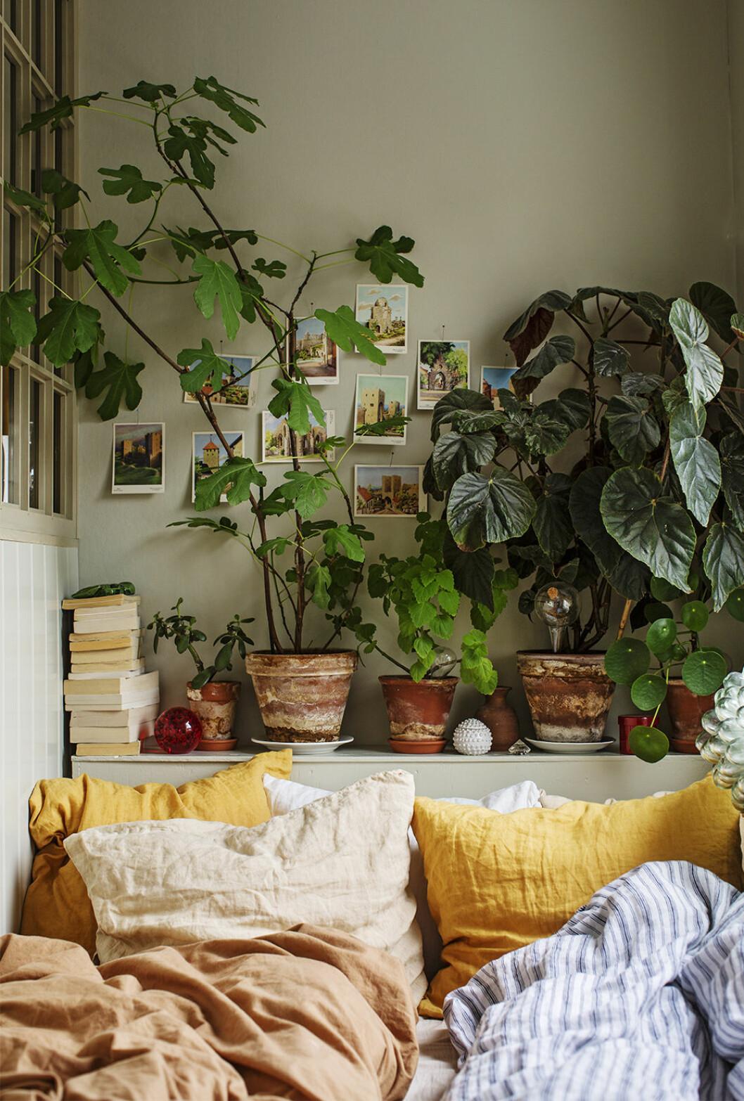 Mysig sovrum med växter och grön vägg