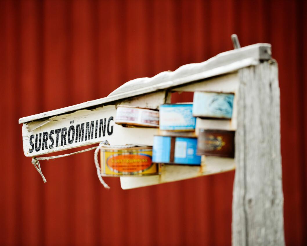 På Ulvön produceras surströmming