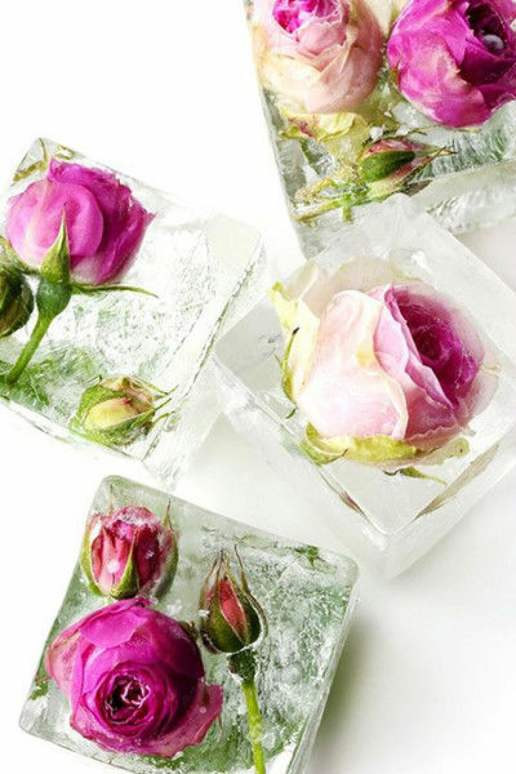 Isbitar med infrysta rosor.