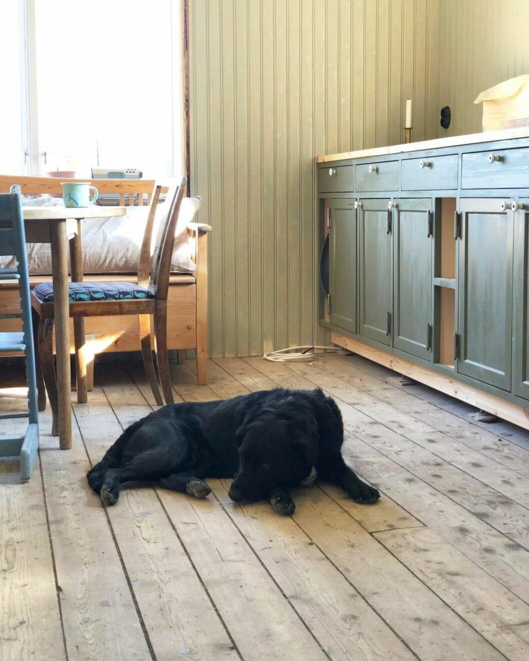 Hund i köket