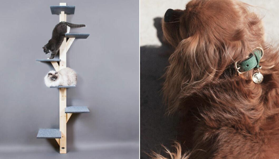 Snygga och trendiga detaljer och tillbehör till hund och katt
