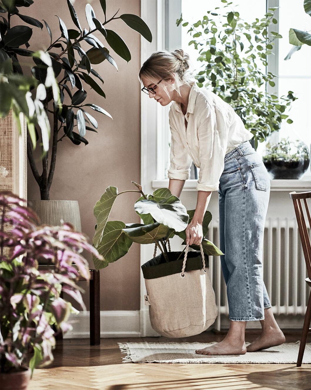 Planteringskasse Botanisk från Ikea