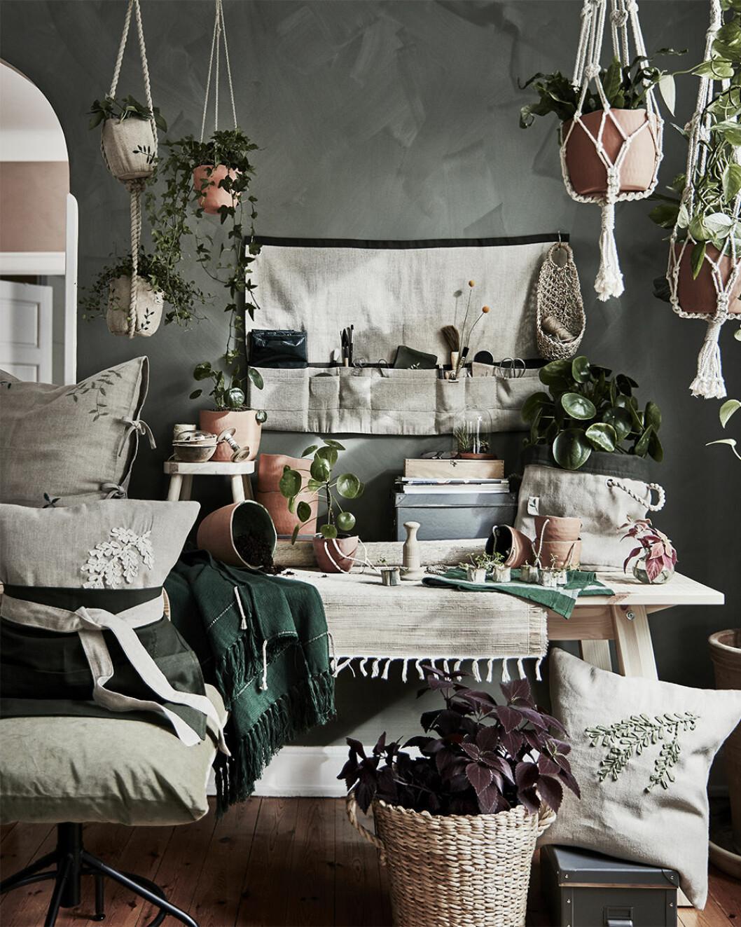 Ikea lanserar kollektionen Botanisk för enkel odling i hemmet