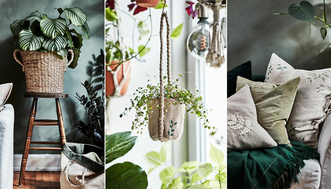 Ikeas kollektion för plantering och odling – botanisk