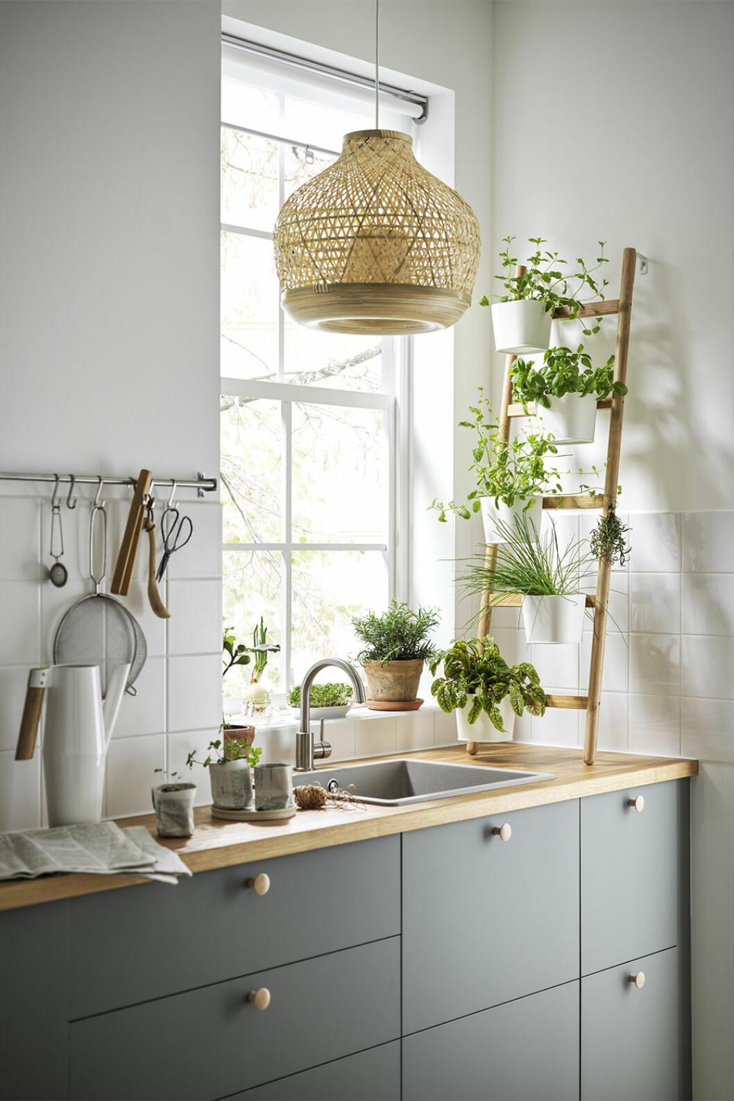 Smart förvaring för växter i köket från Ikea-katalogen 2021