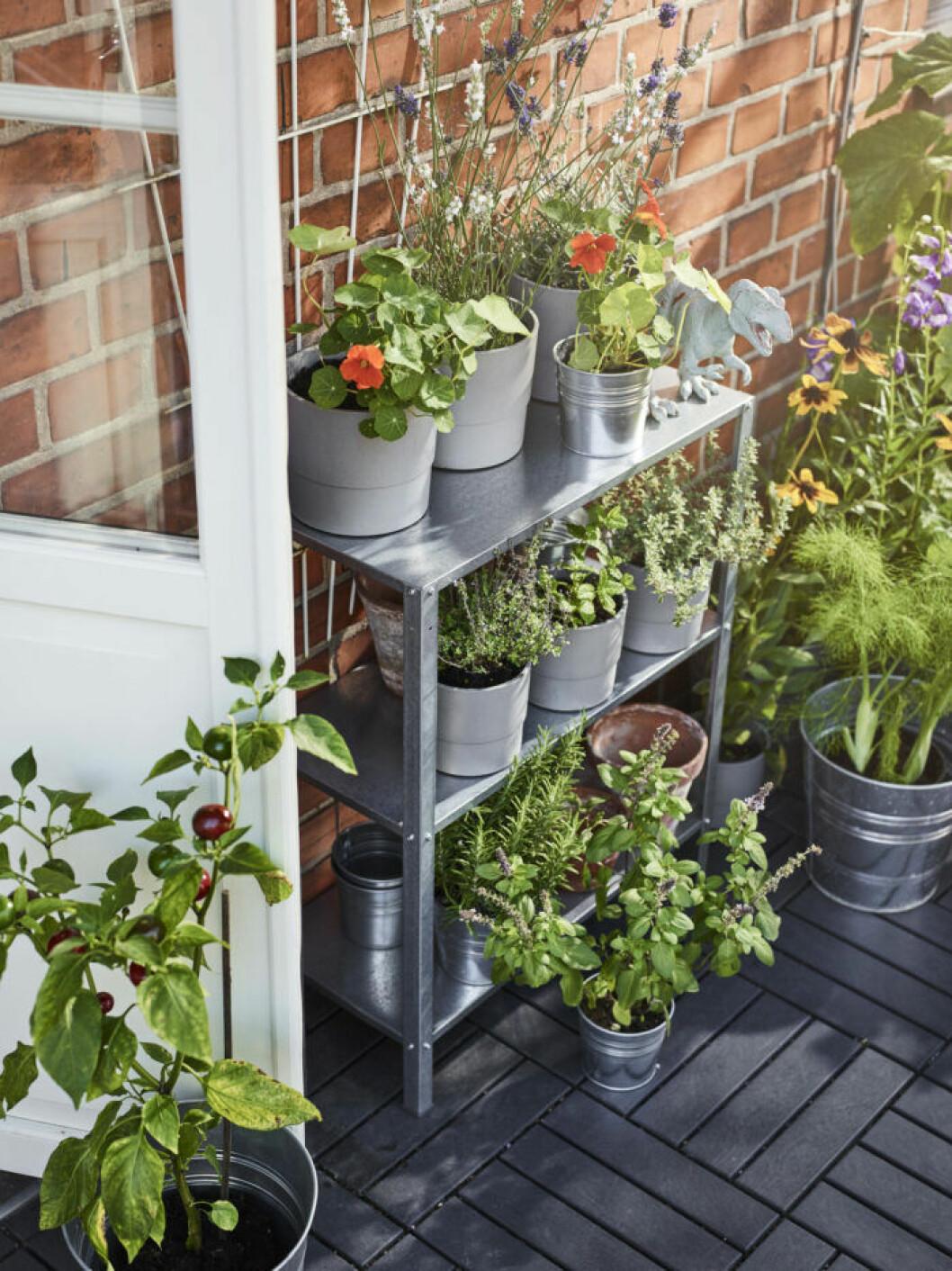 Hyllis med växter i Ikea-katalogen 2019
