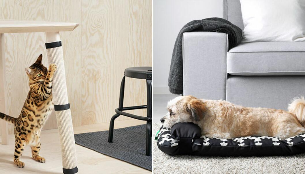 Nu lanserar Ikea en kollektion för djur.