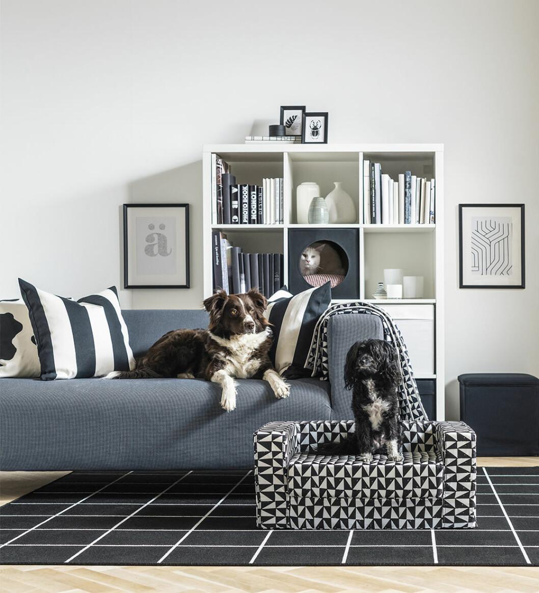 Mini soffa för hunden från Ikea