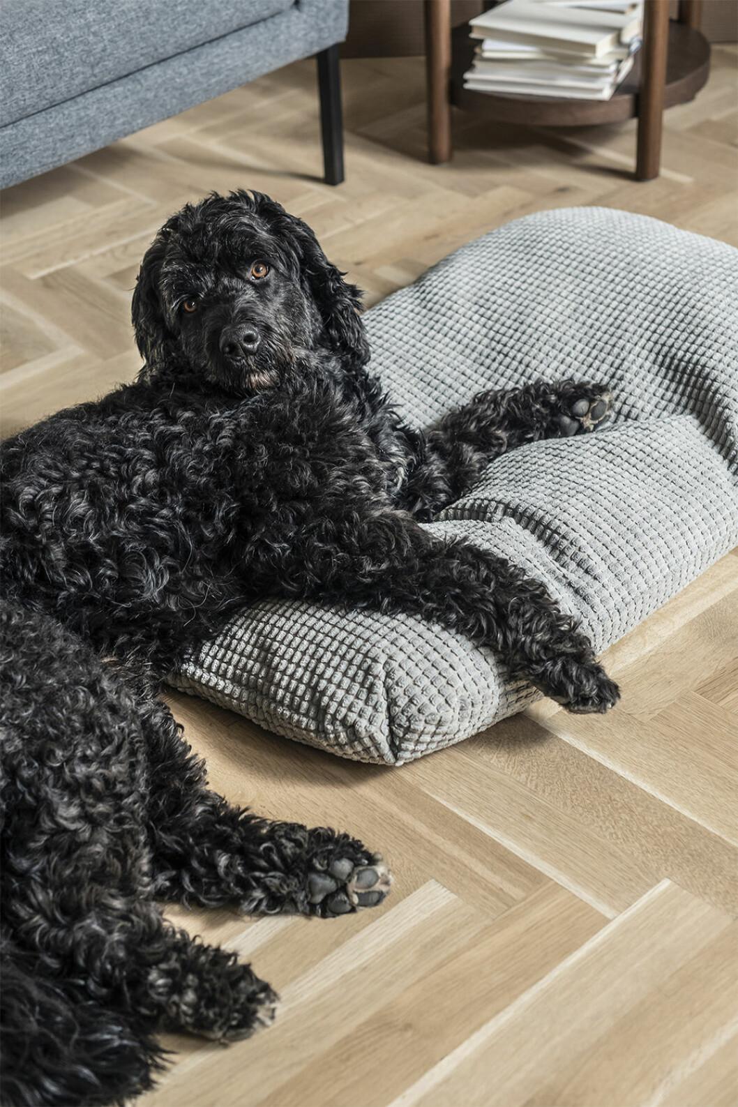 Hundbädd från Lurvig på Ikea